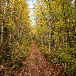 We just had to post another beautiful October photo. It's a great time to come and explore Montana if you love having trails all to yourself, the sound of the leaves crackling with every step, the smells 🥰, the beautiful colors and the temps are perfect at around 70! If you've been here in the fall, what's your favorite thing about it or activity? . . . . . #leaves #fall #smell #fallcolors #october #montana #vacation #vacationmode #silence #colors #forest #pictureperfect #thebestseason #seasons #comestaywithus #play #getoutside #outdoors #hiking #forest